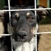 Mi a teendő, ha gazdátlan kutyát talál?