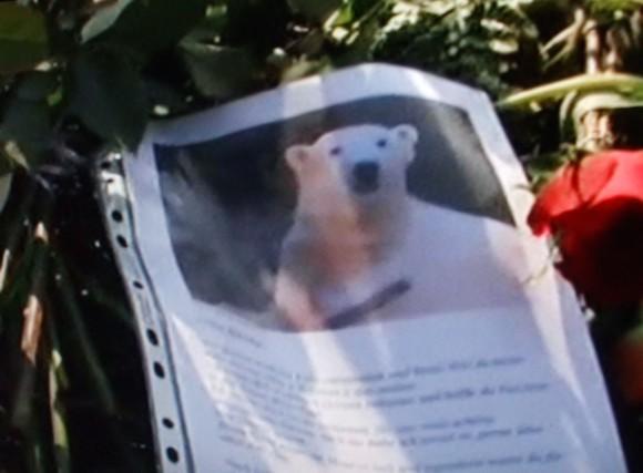 Knut, gyász