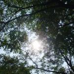 napsutés_falomb1