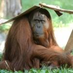 Állatvilág - Állatkert - Hőség2