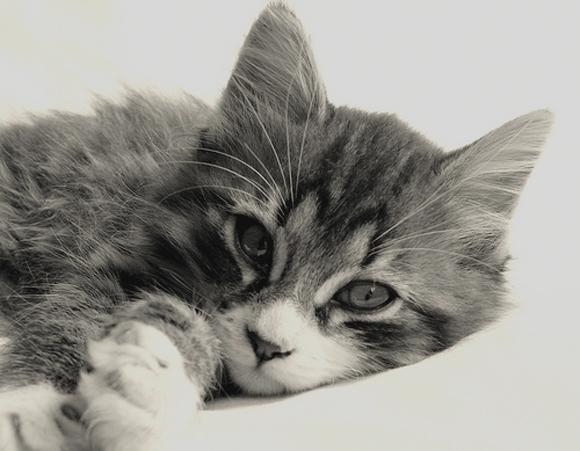 macska_cica