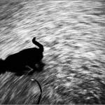 eltunt_kutya