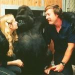 koko_gorilla