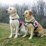 vakvezeto_kutyak