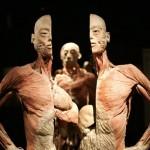 Az emberi_test_The-Human-Body_kiallitas