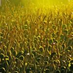 budapest_kapcsolat_koncert