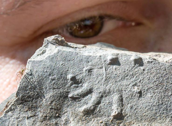 haromszazmillio_eves_fossziliak_nemeto