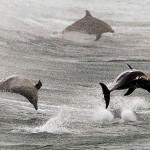 delfin_hadsereg_kikepzes