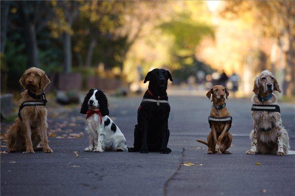 Az egri Mondjunk mancsot! Terápiás és Segítőkutyás Közhasznú Egyesület kutyái az Egri Autista Alapítvány napköziotthonában Egerben 2012. november 14-én.  Az egyesület munkatársai gyógyítási célokra képeznek ki kutyákat, valamint óvodásoknak, fogyatékkal élőknek, hospice osztályok gondozottjainak, sajátos nevelést igénylő gyerekeknek és időseknek tartanak kutyás foglalkozásokat. MTI Fotó: Komka Péter