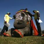 Csitvan_Kali_elefant_szepsegverseny_nepal2013_1