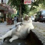 szieszta_relax_kover_macska_humor