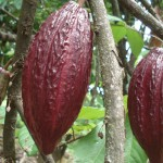 kakao_kakaobab_0