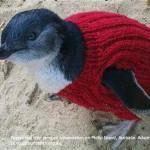puloverek_pingvineknek_ausztralia_mentoakcio.jpb