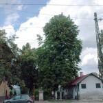 budaorsi_palyaudvar_mav_allomas_vadgesztenye_ev_faja