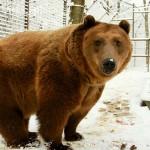 budakeszi_vadaspark_medve