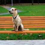 kutyabarat_egyesule4t