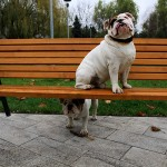 kutyabarat_egyesulet121