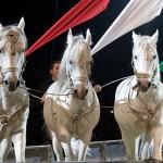 magyar_cirkuszcsillagok_lovas_akrobatika_hungarikum