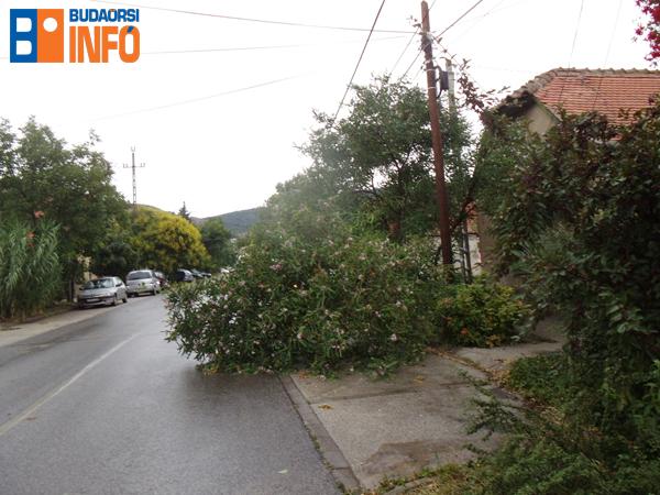 Viharban kidőlt fa Budaörsön a Kisfaludy utcában 2015. július 8-án