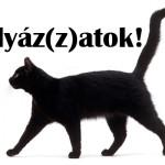 fekete_macska_palyazatok
