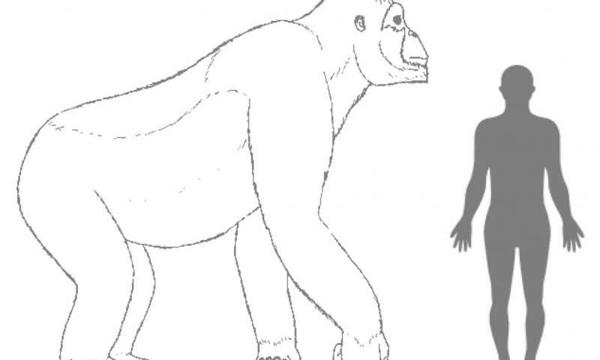 Giganthopithecus