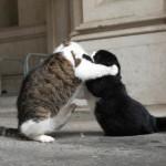 downing_streeti_macska_konfliktus