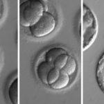 genetikailag_modositott_emberi_embrio_dns_2017