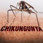 chikungunya_virus_szunyog