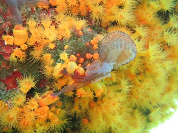 korall_meduza_tenger