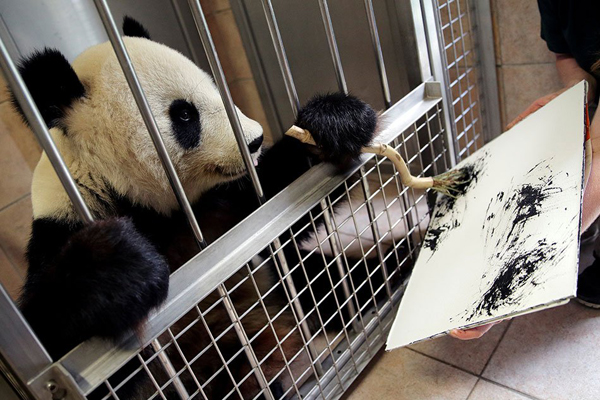 panda_yang_yang_becsi_allatkert2018