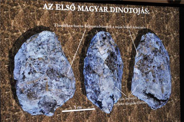 dinotojas