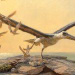 oskori_oriasmadar_Pelagornithidae