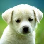 kutya_ebado