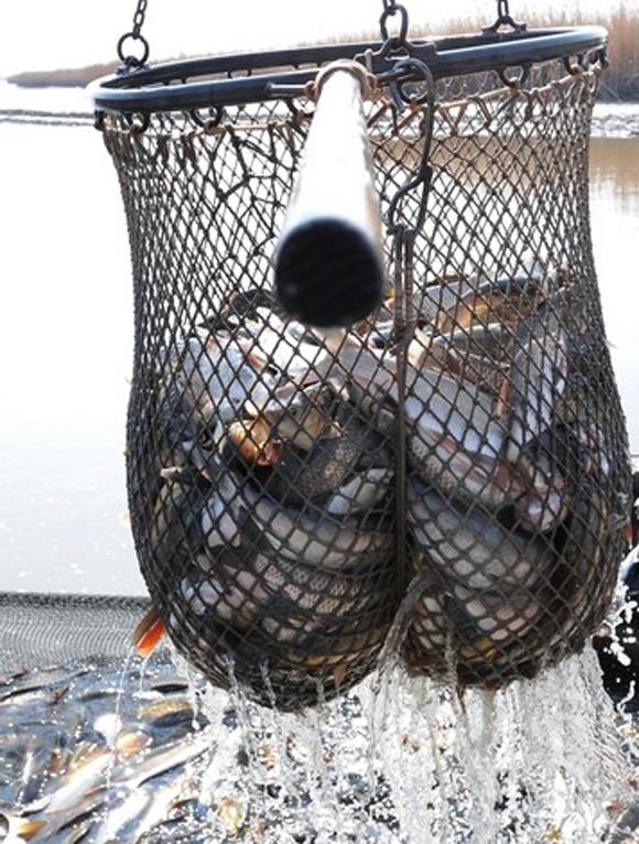 halaszat