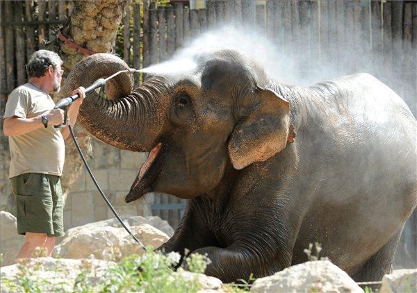 Állatvilág - Állatkert - Hőség