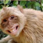neveto_majom