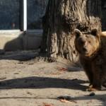 Meglátta a medve az árnyékát az állatkertben, hosszú lesz a tél