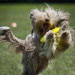 DogChow_kutya_frizbi_vb_Bp2012_000