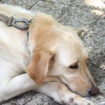 kutya_idosekert_program_budaors_500px
