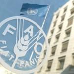 FAO_000