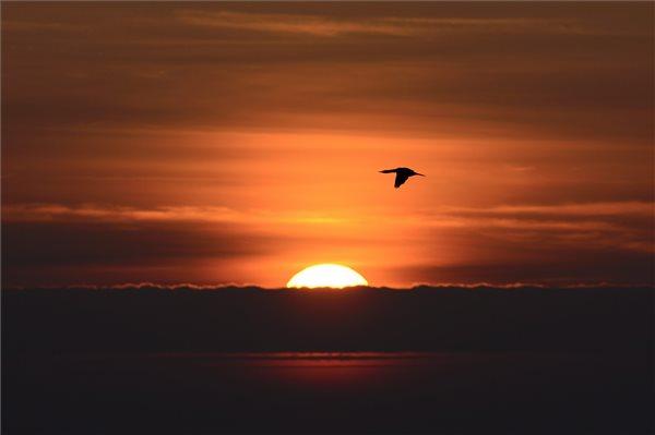 madarak_nagy_karokatona_Phalacrocorax_carbo_balmazujvarso2014nov24