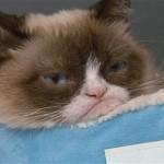Grumpy_a_morcos_macska