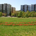 patko_utcai_park_tulipanok