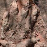 dinoszaurusz_elodje_labnyom_Olesa_de_Montserrat