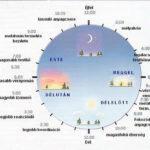 bioritmus_circadian_ora