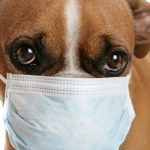 kutya_betegseg_influenza