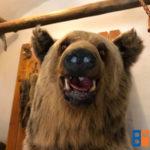 medve_diosgyori_var_2018