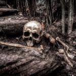 csontvaz