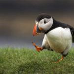lunda_tengeri_madarak